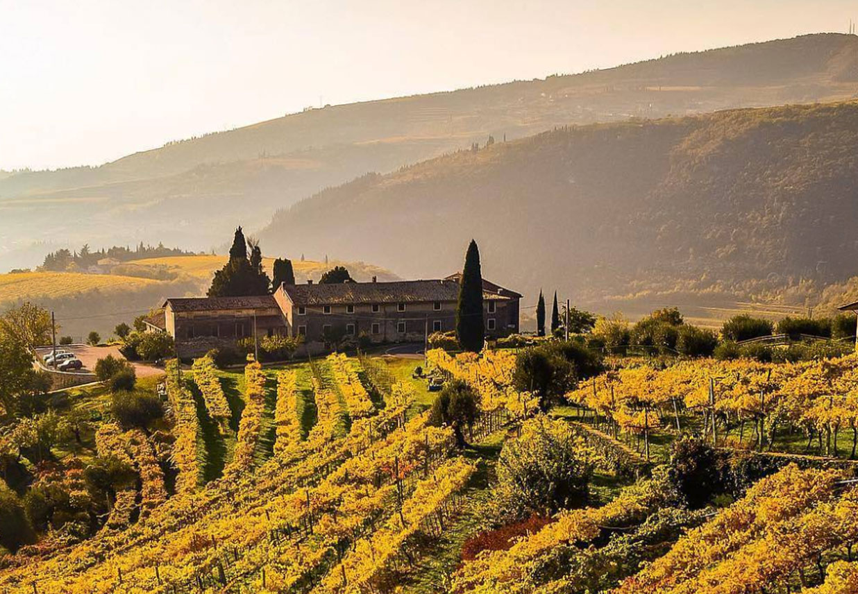 Valpolicella Vineyards visit Veneto